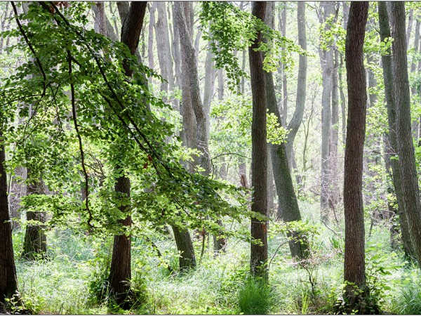 darss forest